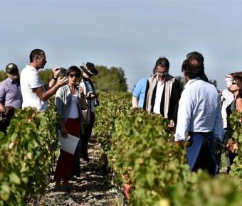 Les Routes du Vin en Graves et Sauternes