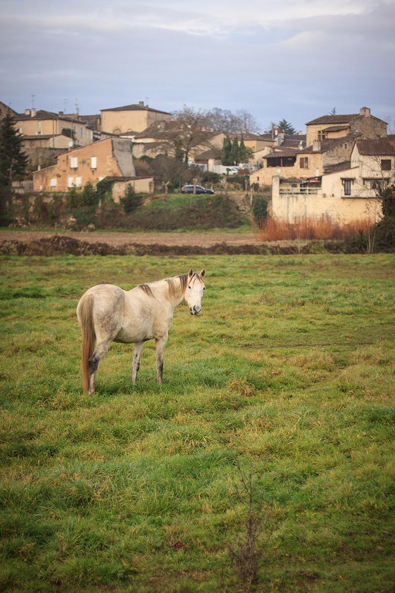 Saint-Macaire ©D. Remazeilles (Gironde Tourisme)