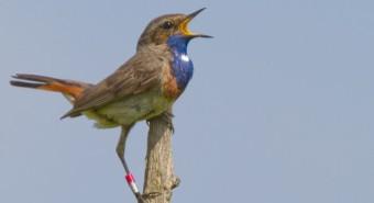 Gorge Bleue - Terres d'Oiseaux