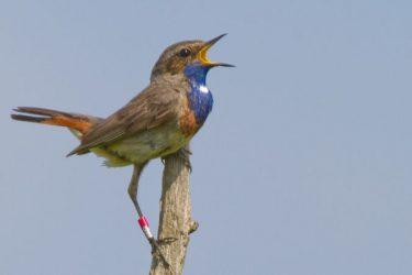 Balade à Terres d'Oiseaux
