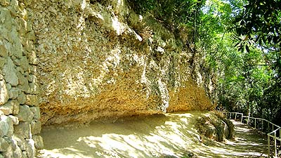Huîtres fossiles de Sainte-Croix-du-Mont