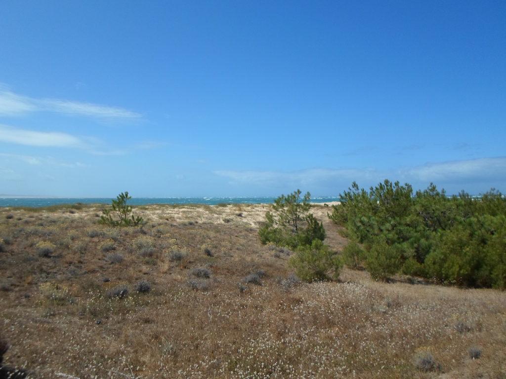 Sorties nature avec la LPO Aquitaine au Cap Ferret