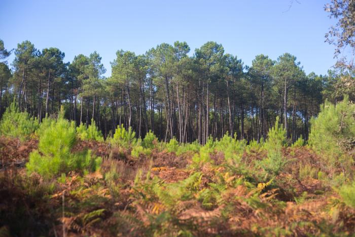 Le Parc Naturel Régional des Landes de Gascogne