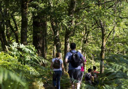 Découverte de la forêt des Landes de Gascogne