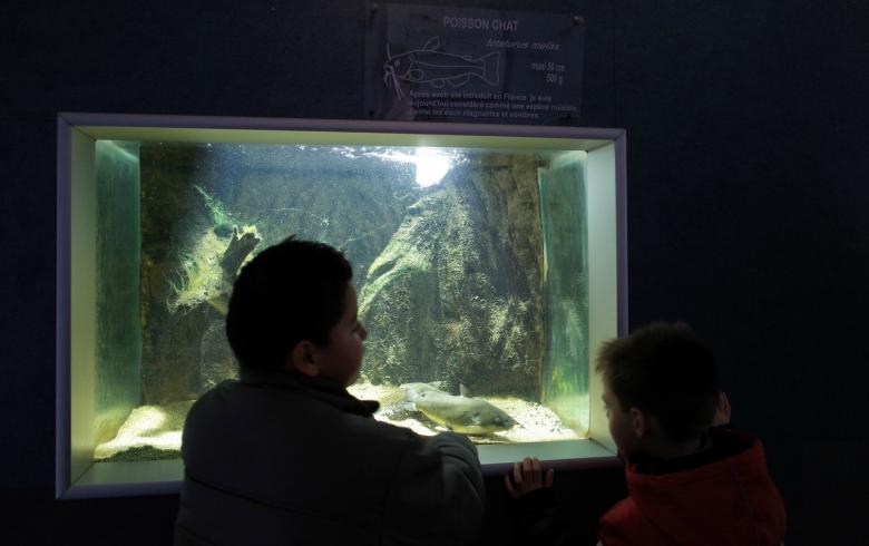 2-Maison-de-la-nature—Aquarium