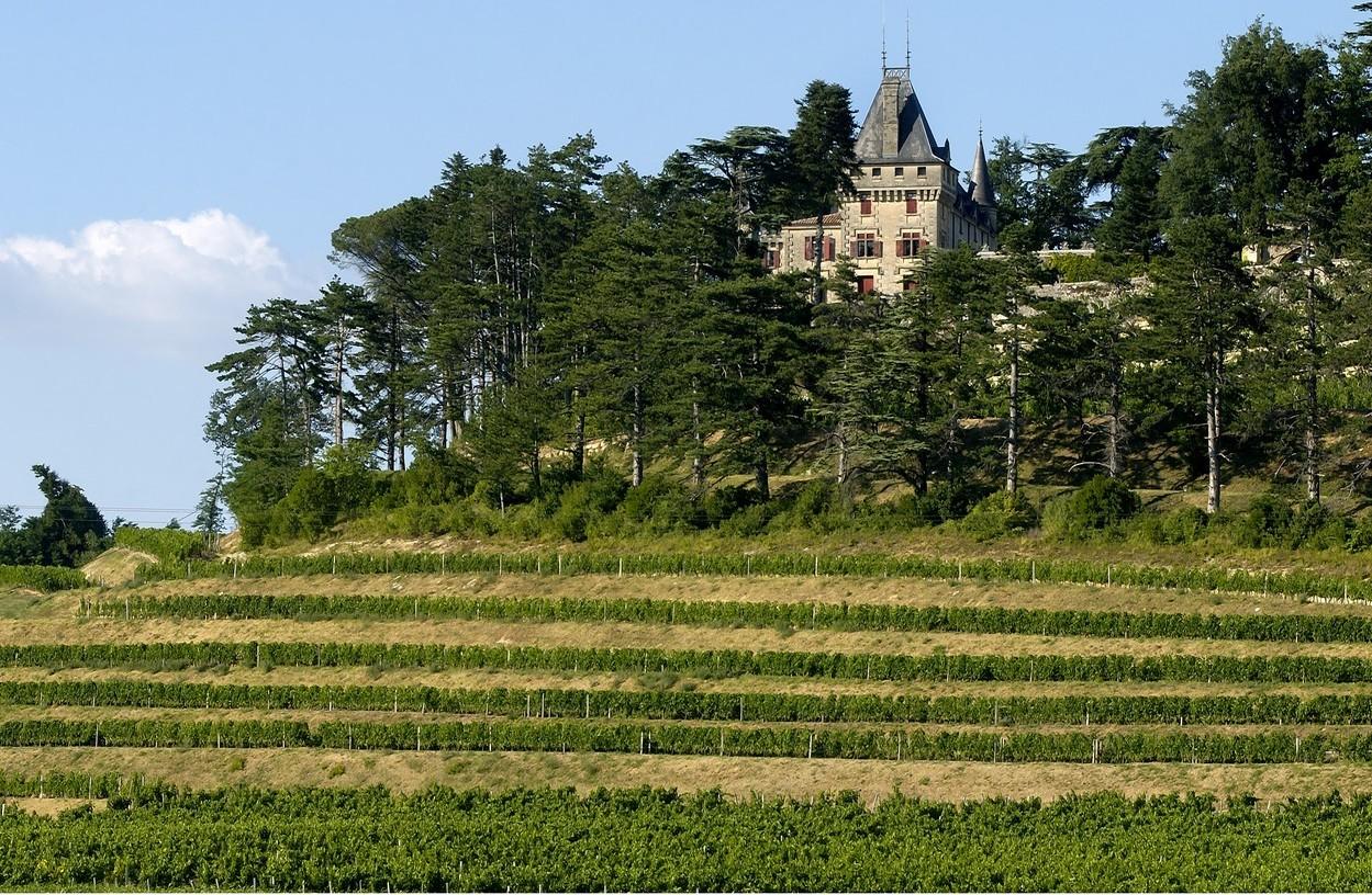 4) Château domine les terrasses de vignes