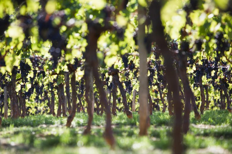 Appellation Castillon Côtes de Bordeaux 4