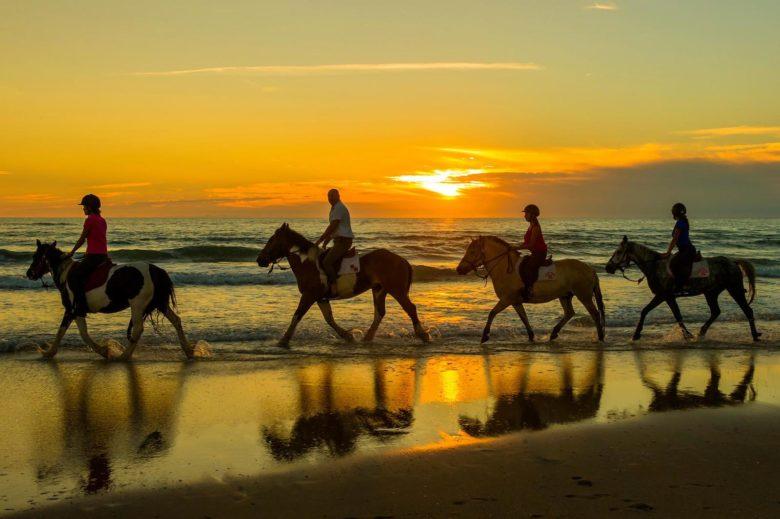 Atlantique-club-Equestre-Ferme-Pedagogique–3