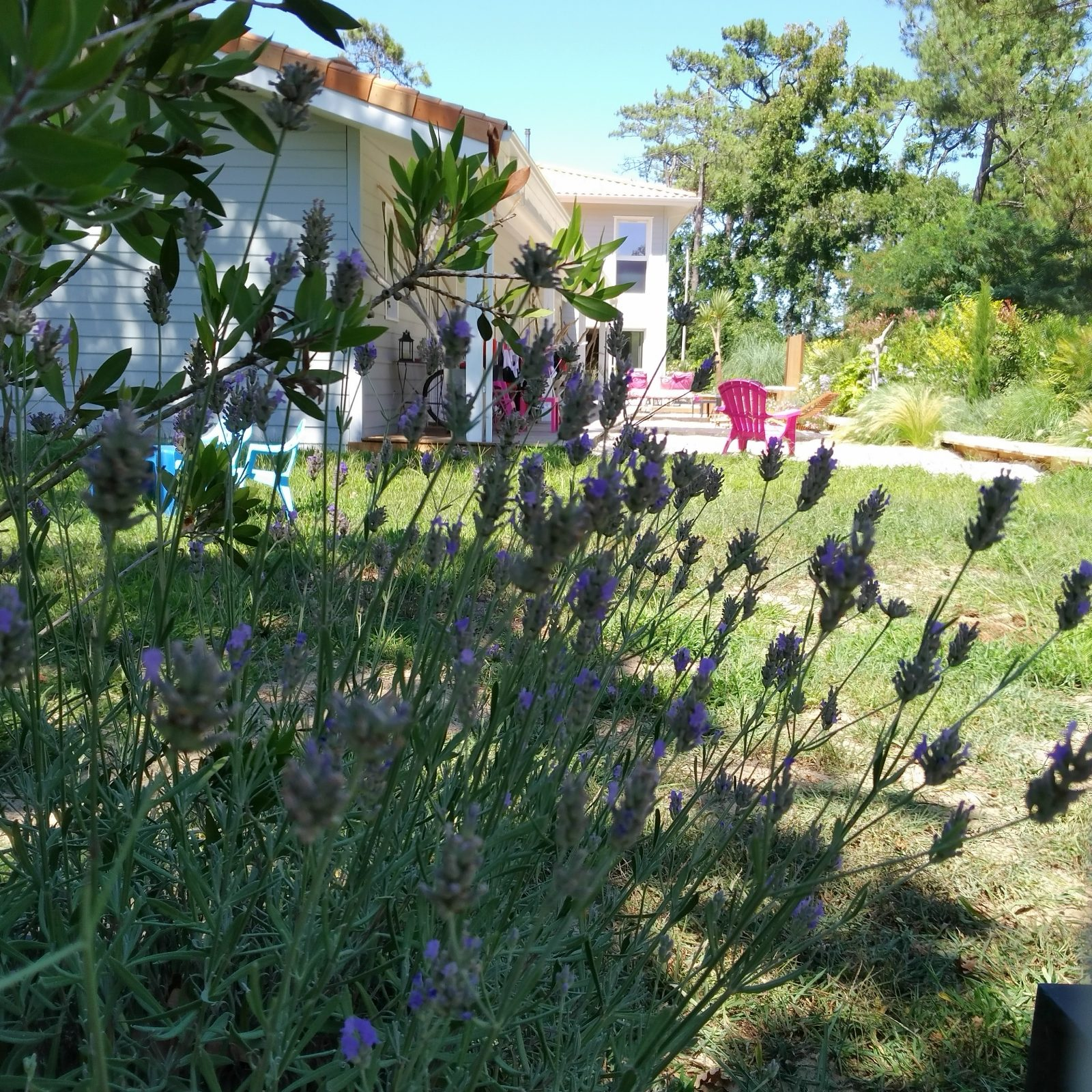 Au jardin des Libellules7