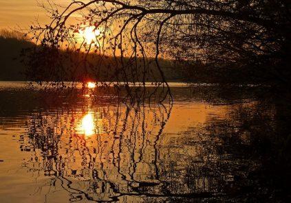 Balade crépusculaire en forêt – Copie