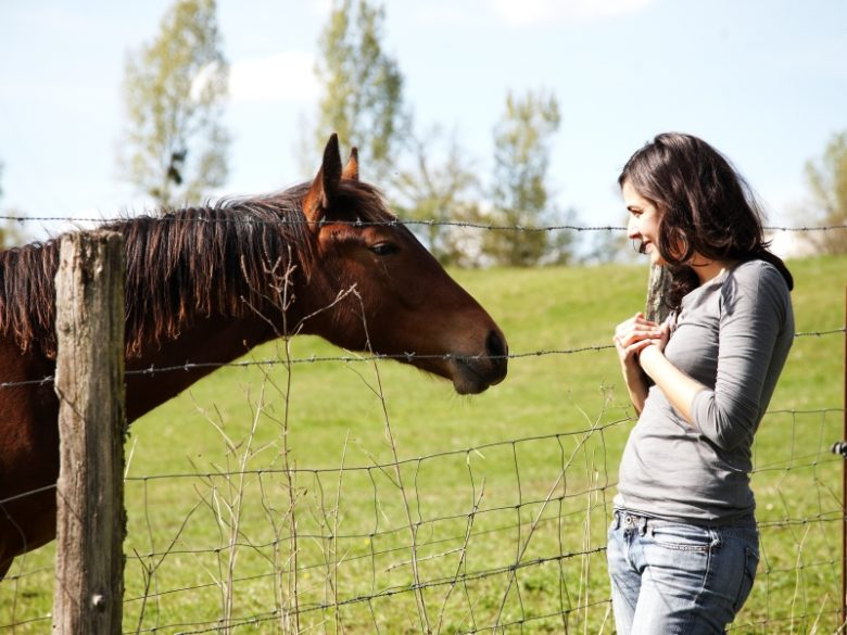 Bazadais – équitation