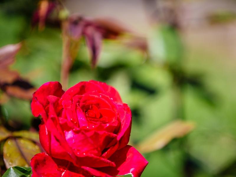 Bazas – Jardin du Sultan (2)