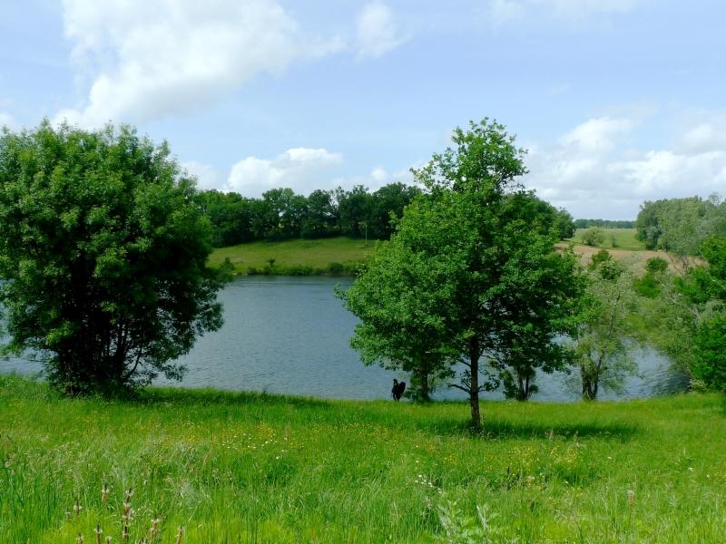 Bazas – étang St Michel (ph.Elodie F) (3)