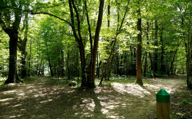 Bois Margnat (2)