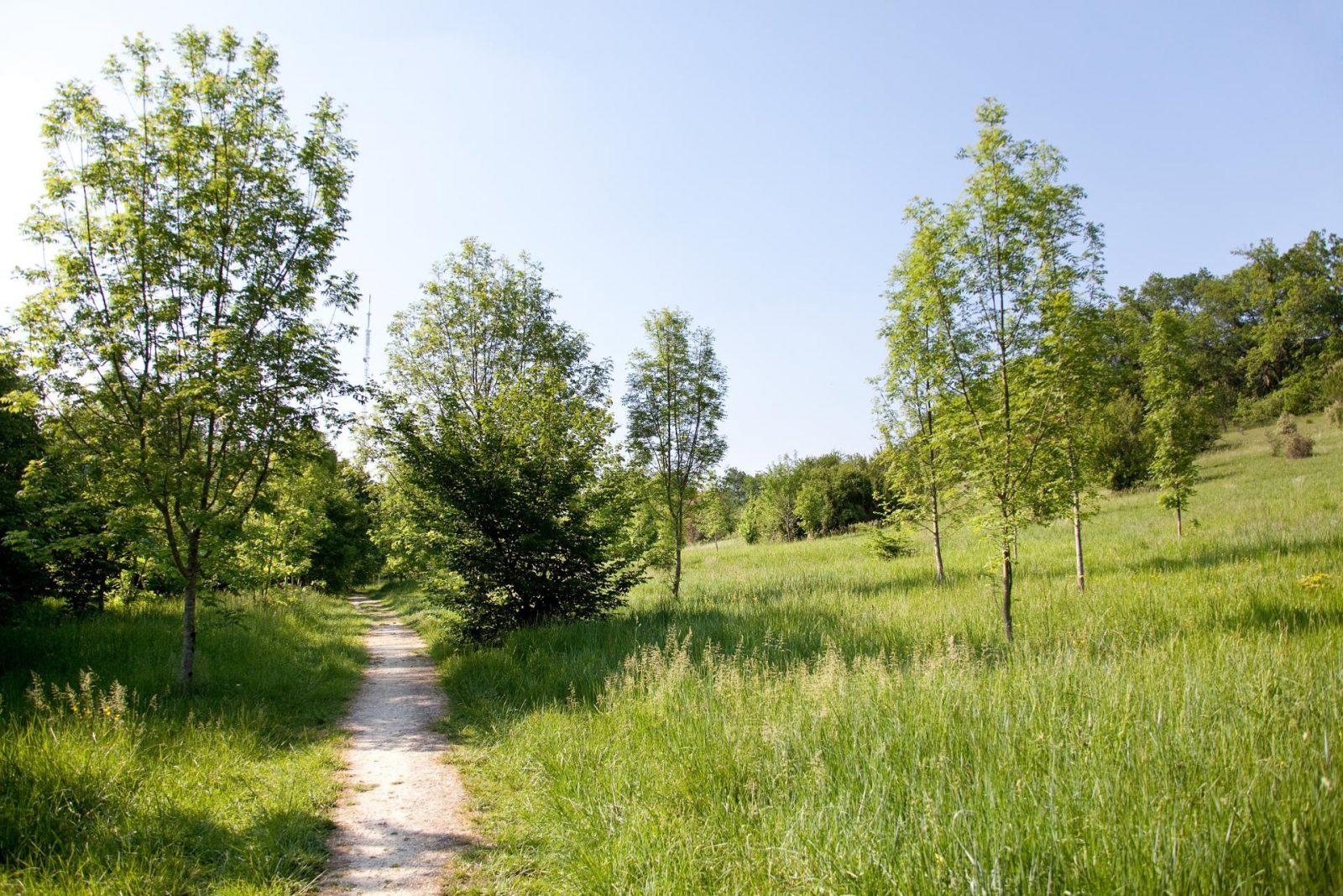 Bois de Loc Boué – ©Ville de Bouliac (6)