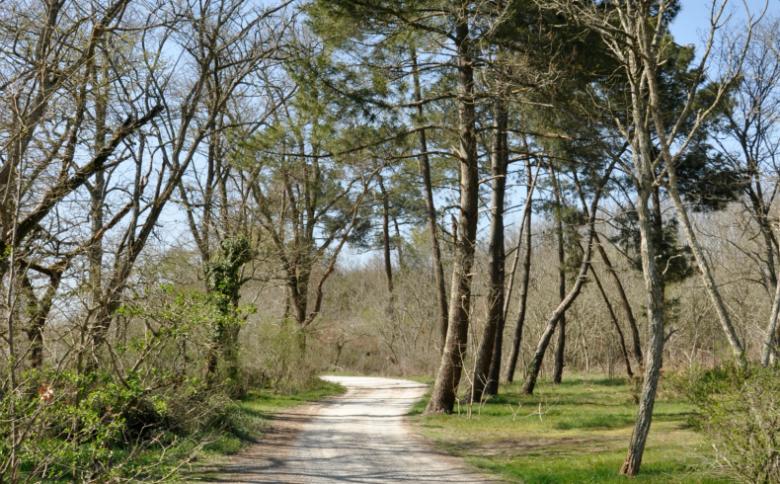 Bois du Dehes ©Ville du Haillan (1)