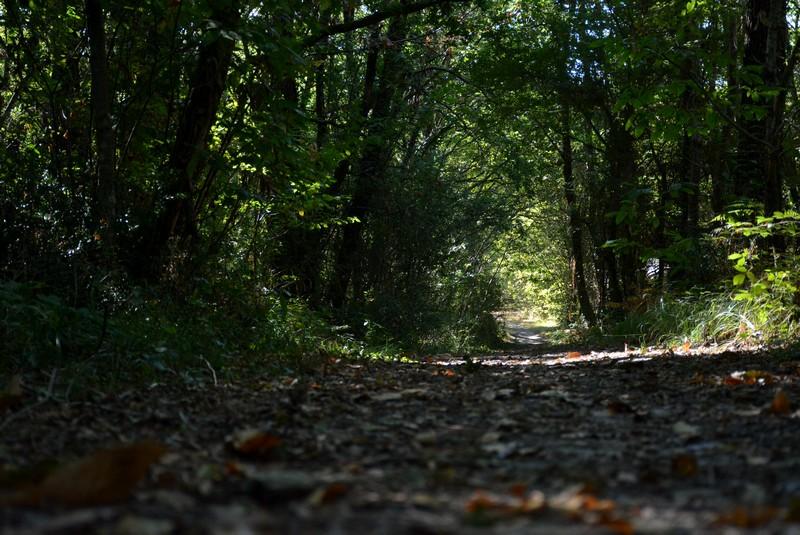 Boucle_du_Haros_800x600_forêt_Saint Yzan de Soudiac_Crédit photo OTLNG (33)