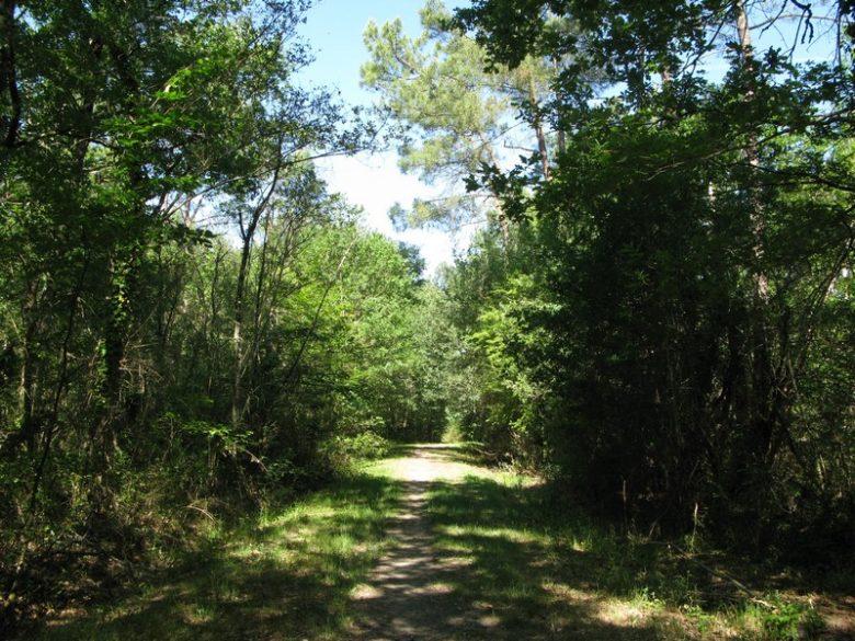 Forêt Marcenais