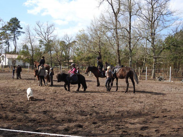 centre equestre 9