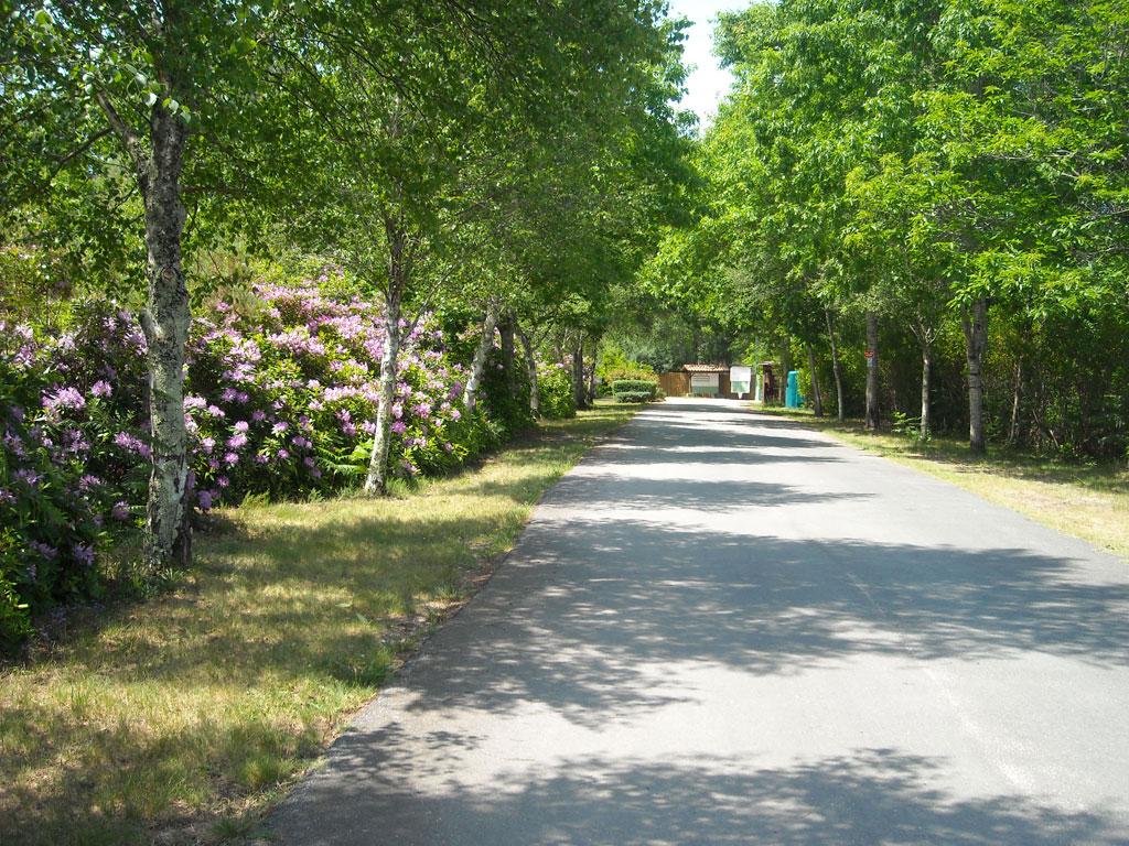 Camping Le Fougères – Lacanau (10)
