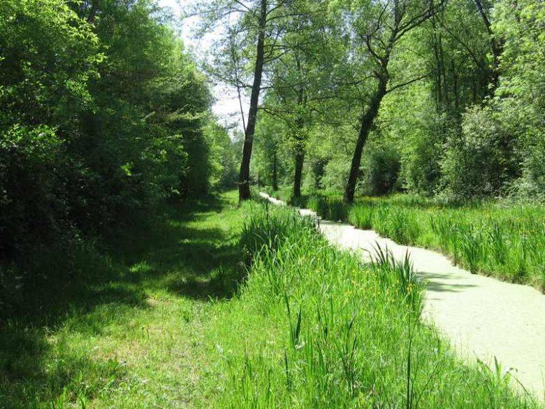 Canal d'irrigation ensoleillé