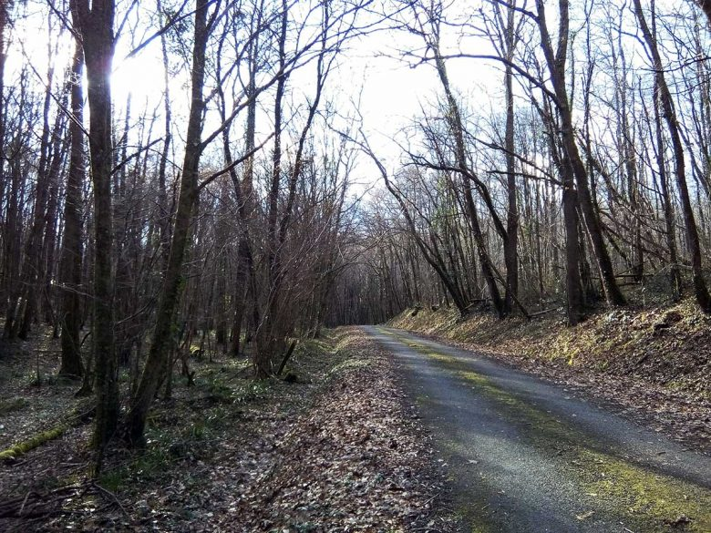 Caudrot-route-au-milieu-de-la-forêt