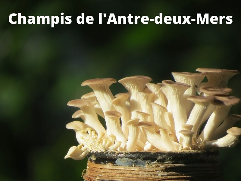 Champis-de-l-Antre-deux-Mers–3-