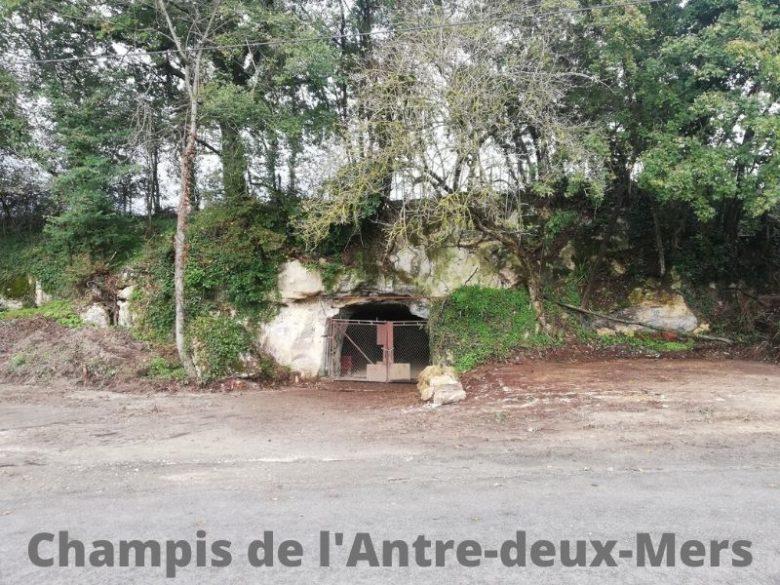 Champis-de-l-Antre-deux-Mers–5-