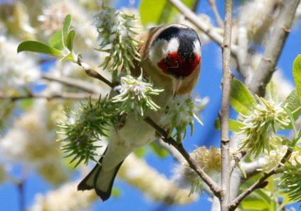 Les oiseaux nous enchantent !