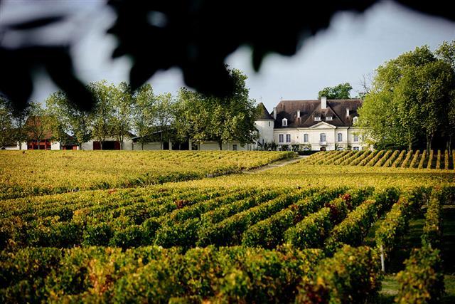 Château Bouscaut – Vigne