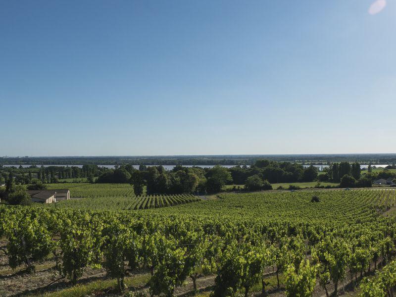 Bordeaux 45