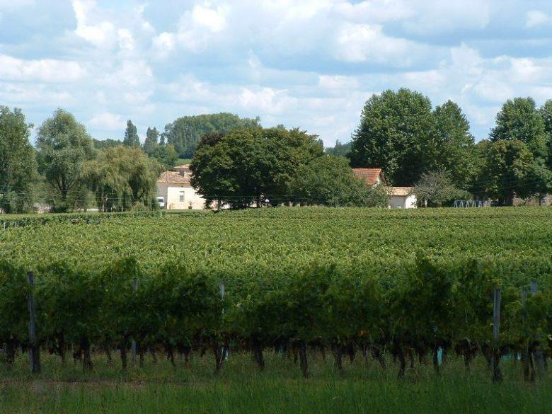 Château l'Insoumise – Vignes