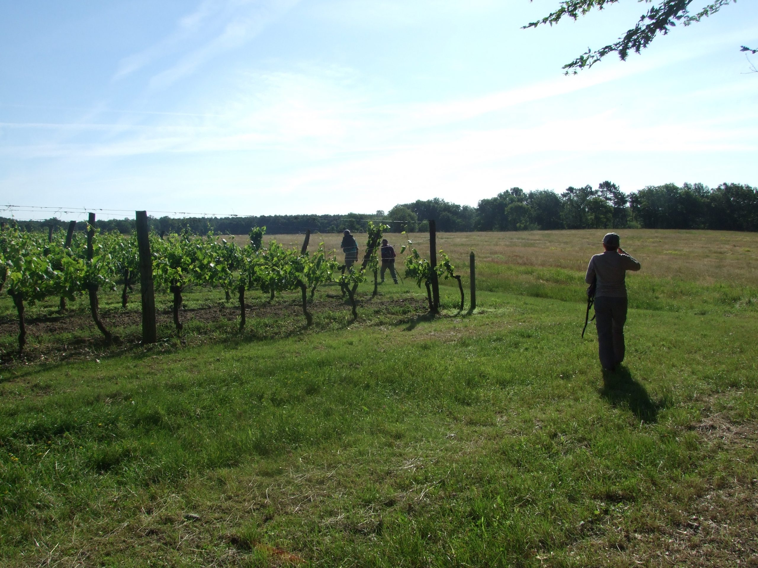 Cours-les-bains – parcelle de vignes boucle du Lysos