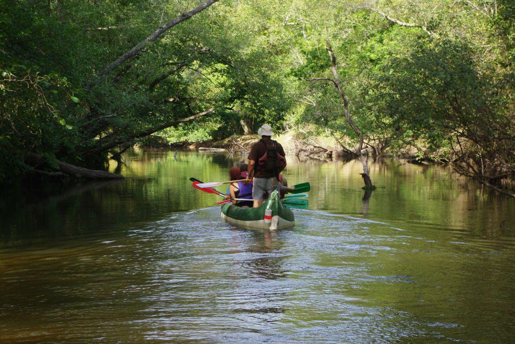 Descente de la Leyre en canoë collectif