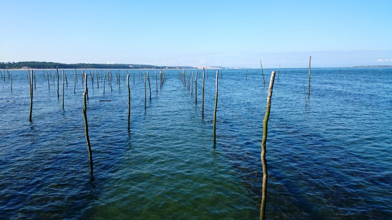 Dégustation d'huîtres – castaing 2