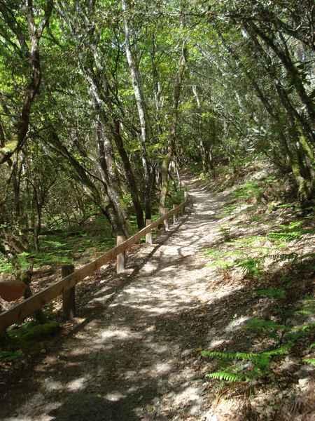 Des sentiers aménagés qui serpentent à travers les sous-bois