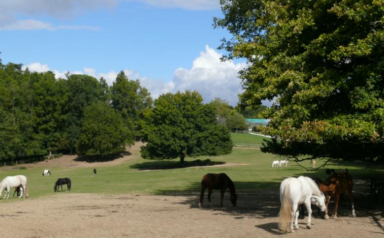 Domaine de la Burthe – Floirac (2)