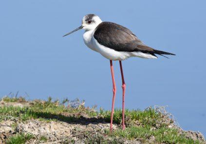 Découverte ornithologique : les oiseaux du bassin au cours des saisons