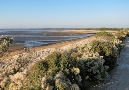 Accueil naturaliste sur le sentier du littoral à la Pointe du Teich