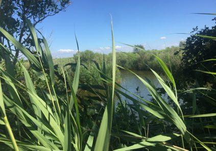 Accueil naturaliste sur le Domaine de Fleury