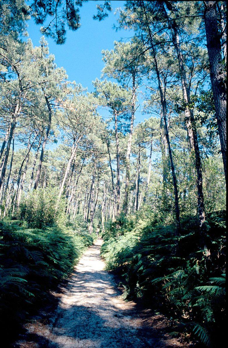 Forêt de Lanton