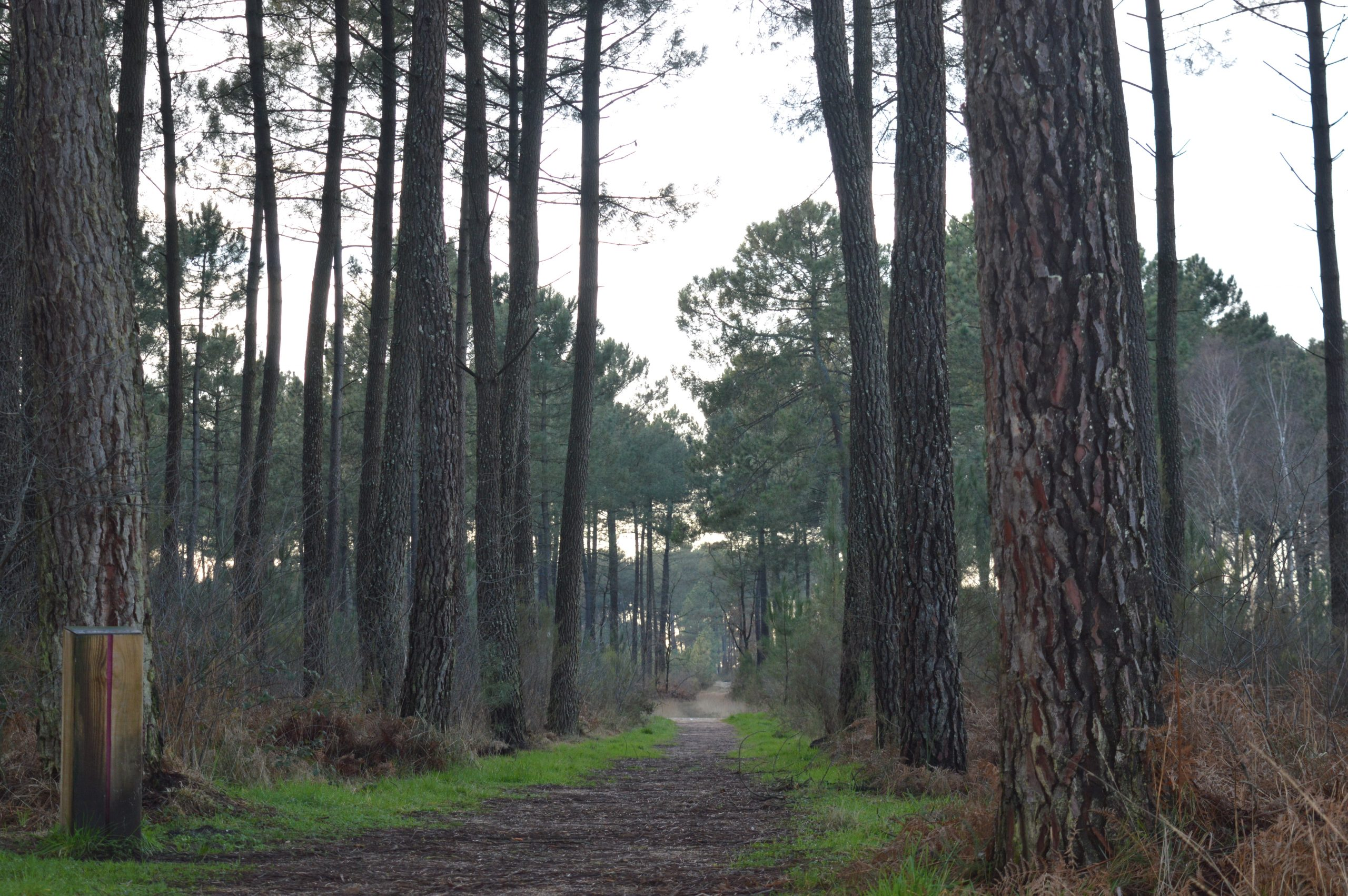 Foret-de-Migelane–EstelleSOLER–13-