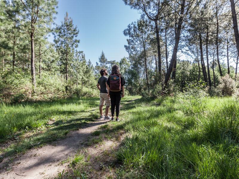 Forêt-de-pins3