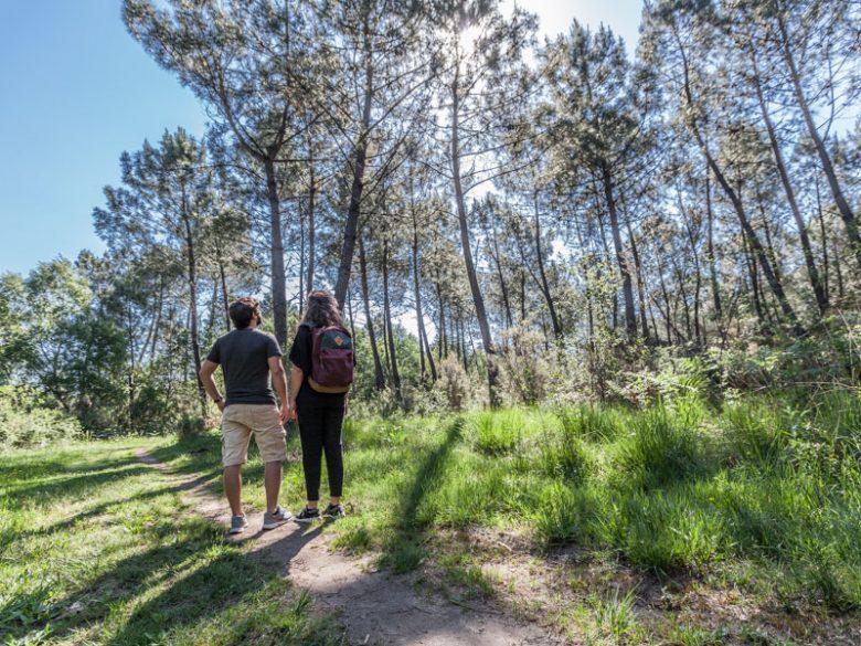 Forêt-de-pins4
