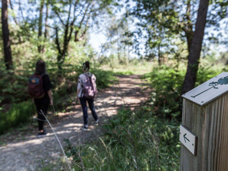 Forêt-de-pins5