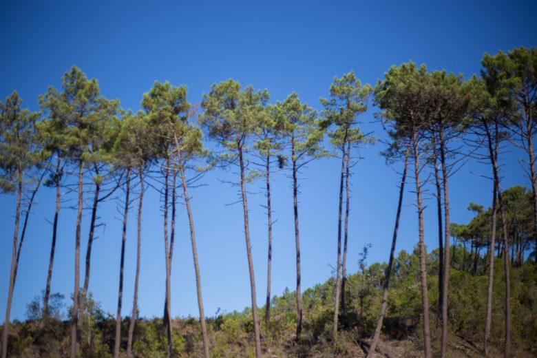 Forêt domaniale de Lacanau – © David Remazeilles (8)