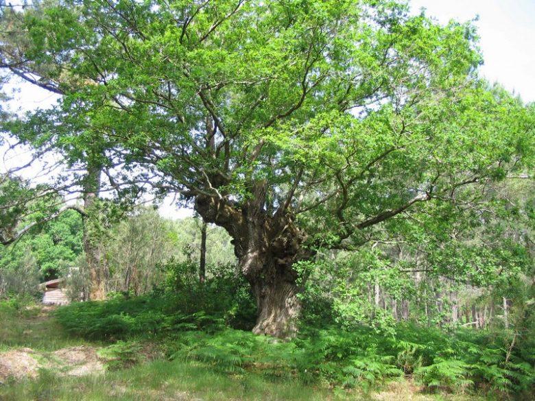 Forêt usagère