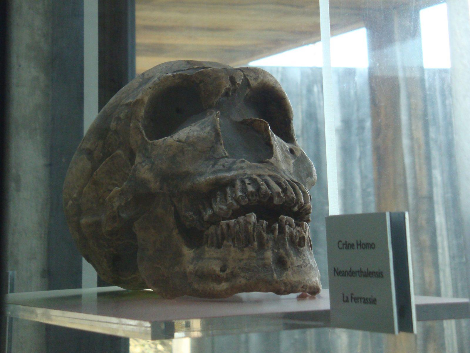 Grotte Pair non Pair Prignac crâne 800×600