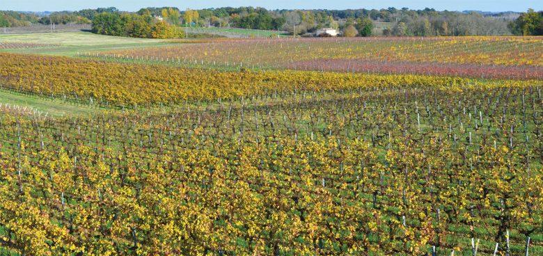 Haut-Gaussens—vignes-automne