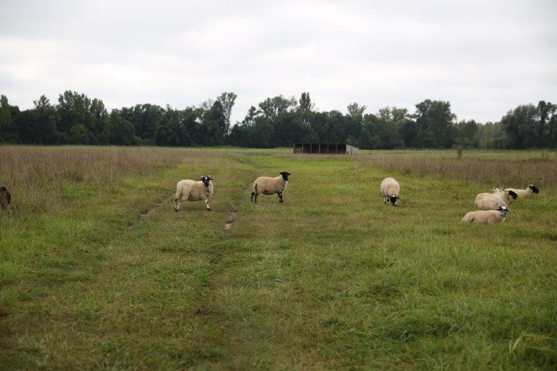 Ile-Raymond-Moutons